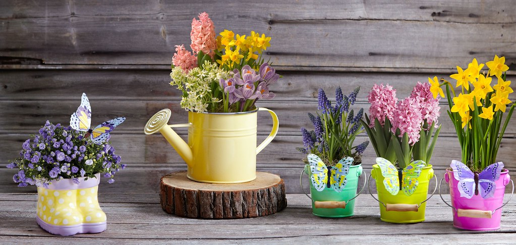 Spring collection flowers potted plants daffodil hyacinth flickr spring collection flowers potted plants daffodil hyacinth canterbury bells with butterfly pail and watering can mightylinksfo
