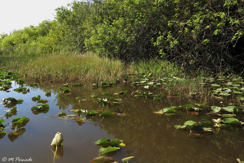 parque nacional everglades fica - photo #3