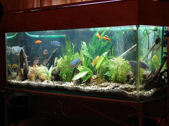 fish-tank-2