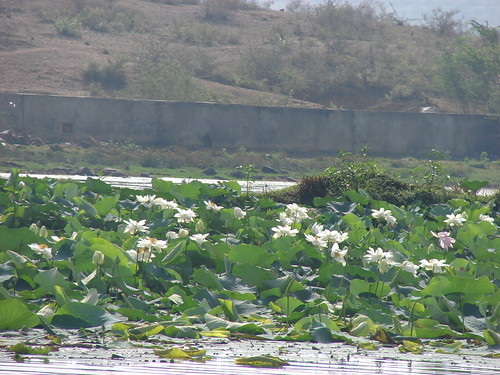 Kalisil River Karauli, Rajasthan