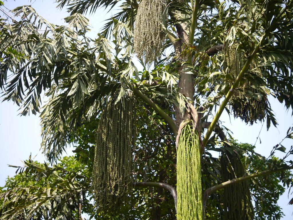 H Top Palm Beach Lloret De Mar Tripadvisor