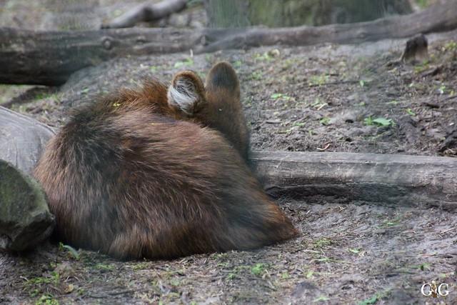 Tierpark Friedrichsfelde 10.05.201529