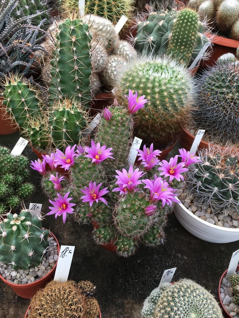 Ha-Ka-Flor - cactus et plantes grasses 27773073024_b0854ca448_b