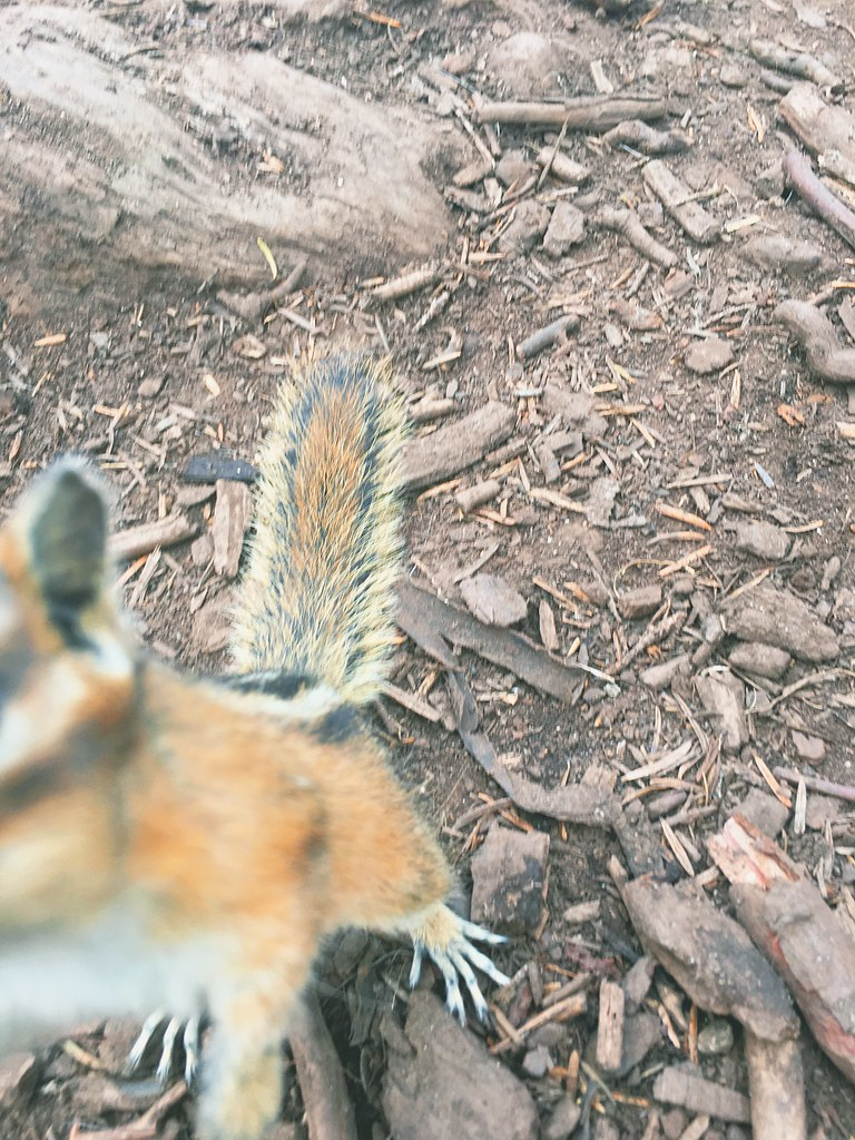 Chipmunk photobomb