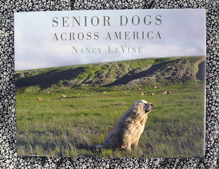 2016-07-15 - Senior Dogs Across America - 0014 [flickr] | by smiteme