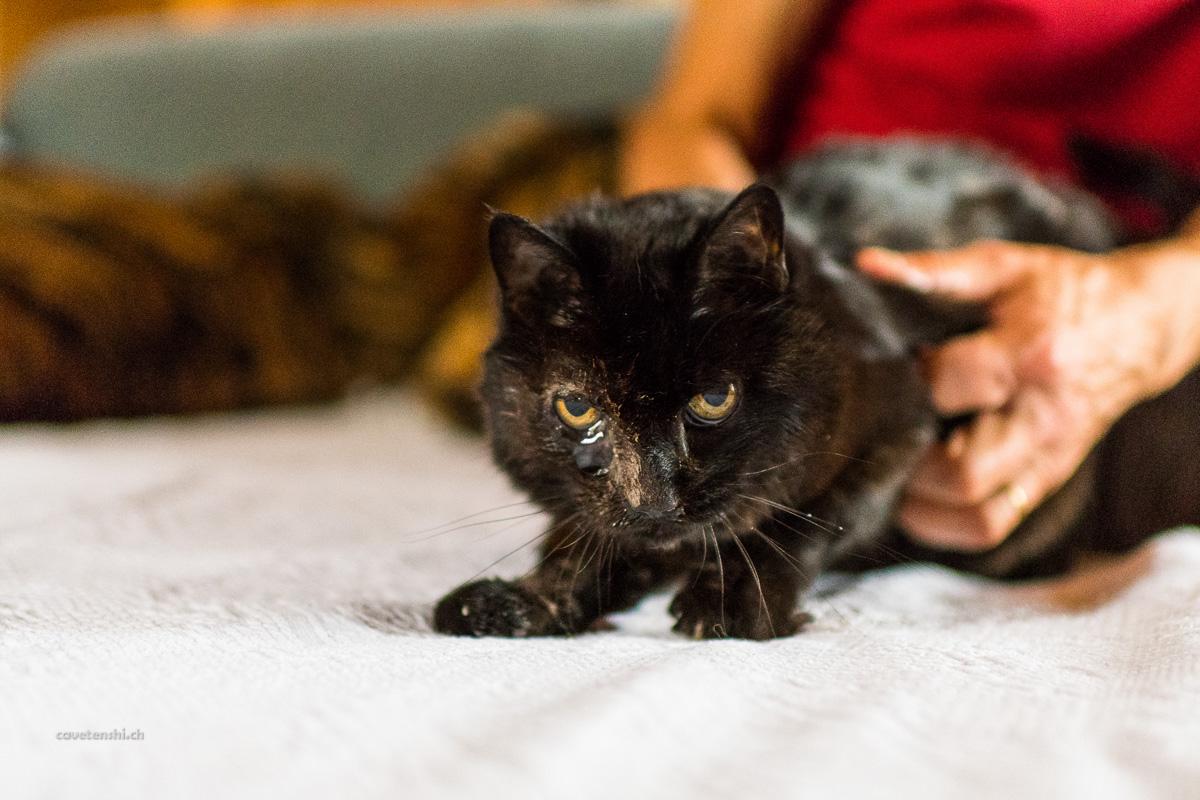 """""""Dreifuss"""": ein Projekt mit einer dreibeinigen Katze ..."""