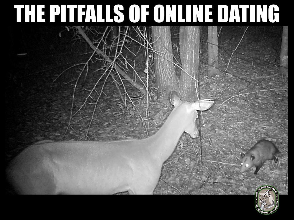 Pitfalls of online dating