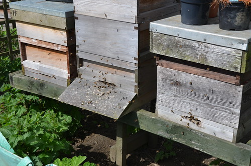 beehives May 15 1