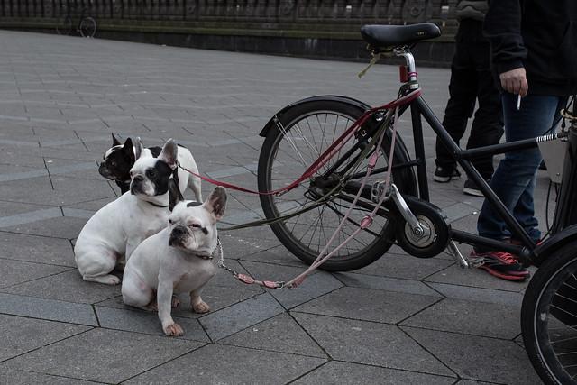 Danish Dogs