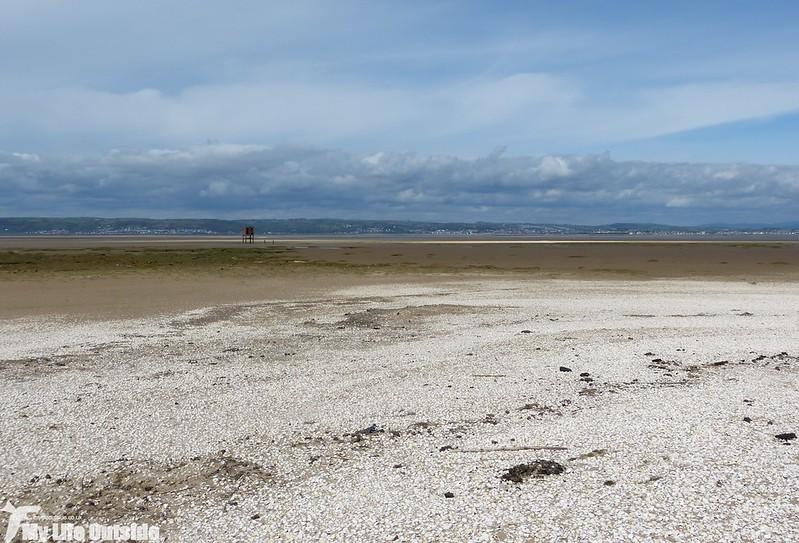 P1120720 - Llanrhidian Marsh