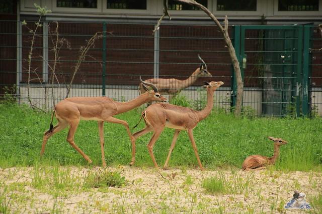 Tierpark Berlin 10.05.2015  82