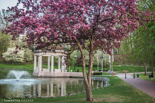 Beautiful Blossoms in Congress Park