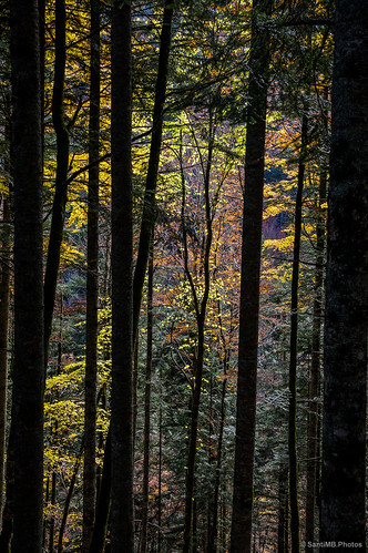 La luz del sol atraviesa hojas de diferentes colores.