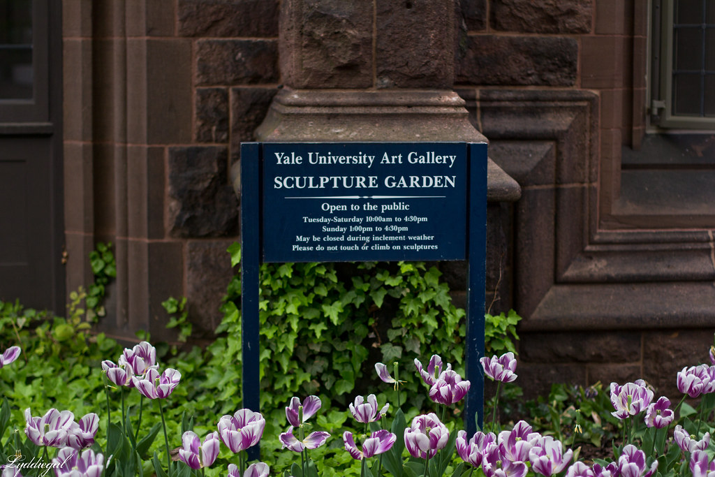 tulips at yale-1.jpg