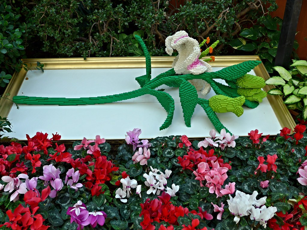 Stunning Lego Oriental Lily  Real Cyclamens Lauritzen Gardens Om  Flickr With Goodlooking  Lego Oriental Lily  Real Cyclamens Lauritzen Gardens Omaha  By Ali  Eminov With Adorable Garden Windmills Also National Open Gardens In Addition Garden Centre Kenilworth And Blue Garden Stones As Well As Kew Botanic Gardens Additionally Zen Garden Nairobi From Flickrcom With   Goodlooking Lego Oriental Lily  Real Cyclamens Lauritzen Gardens Om  Flickr With Adorable  Lego Oriental Lily  Real Cyclamens Lauritzen Gardens Omaha  By Ali  Eminov And Stunning Garden Windmills Also National Open Gardens In Addition Garden Centre Kenilworth From Flickrcom