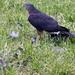 Bird watching in the back yard