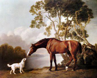 Kumpulan Cerita Hewan Anjing Dan Kuda Cerita Fabel Anjin Flickr