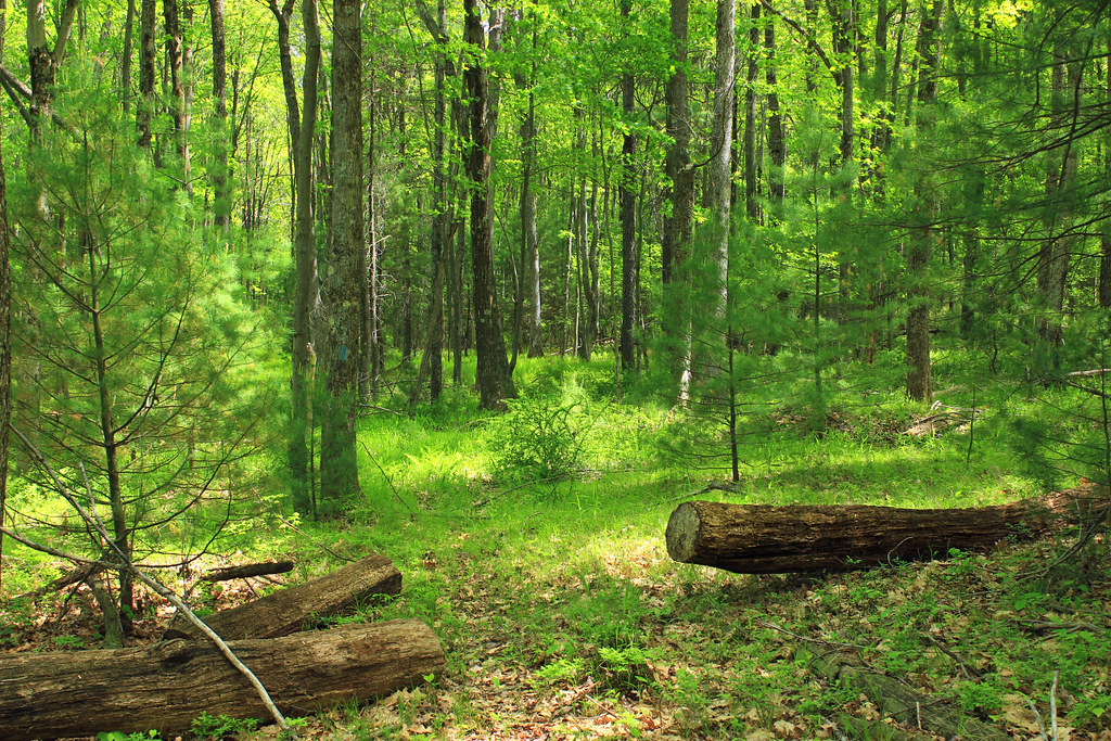 Cranberry Swamp Natural Area 30 Dense Forest Of