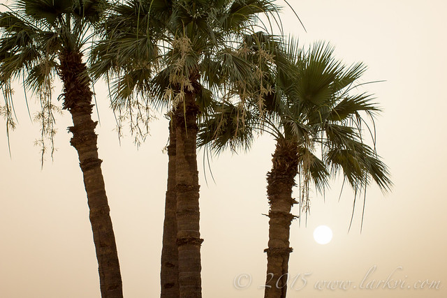 Sunset, Luxor, Egypt 2015