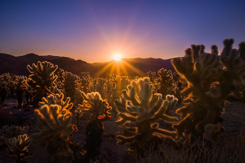 Sunrise at the Cactus Garden