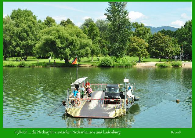 Sie ist eine meiner Lieblings-Neckarfähren: die Fähre zwischen Neckarhausen und Ladenburg. Diese Fähre ist nicht nur historisches Denkmal, sondern auch eine touristische Attraktion, zumal dieser Neckarabschnitt für mich zu den idyllischsten zwischen Mannheim und Heidelberg zählt. - Foto: Brigitte Stolle 2016