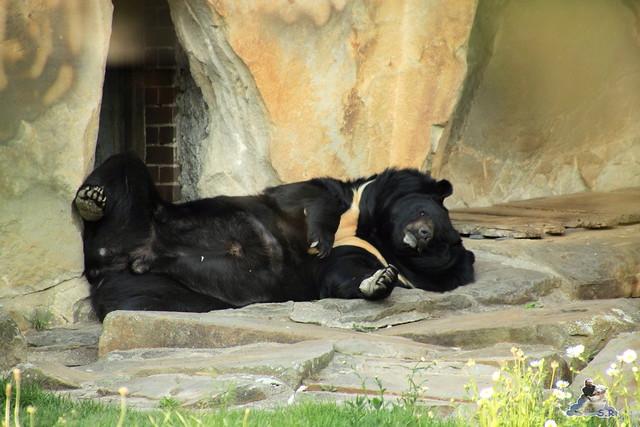 Zoo Berlin 13.05.2015  75