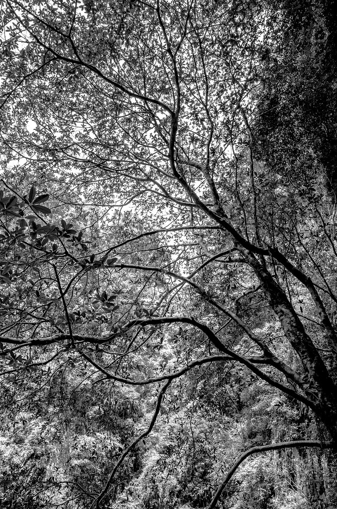 Intricate canopy