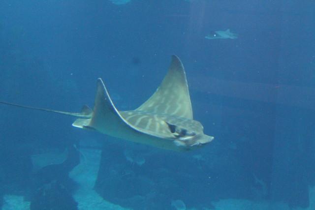 oceanario-lisboa10