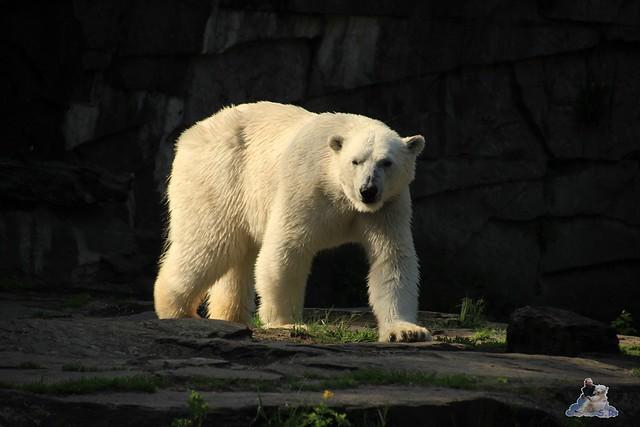 Tierpark Berlin 09.05.2015  3