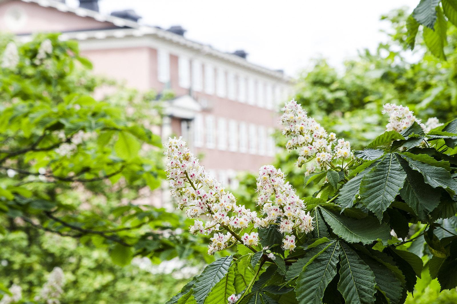 Stockholm, hemma hos mig www.traningsgladje.se