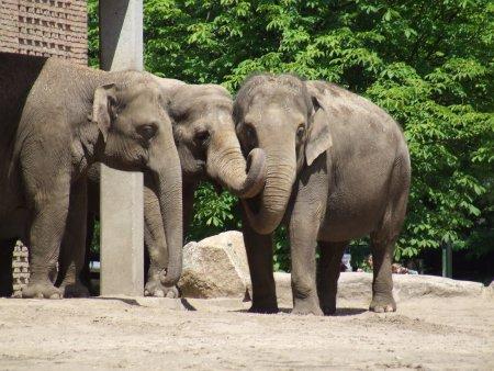 zoo berlin 3