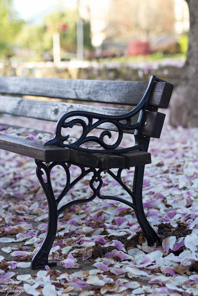 bench under the magnolia tree-1.jpg