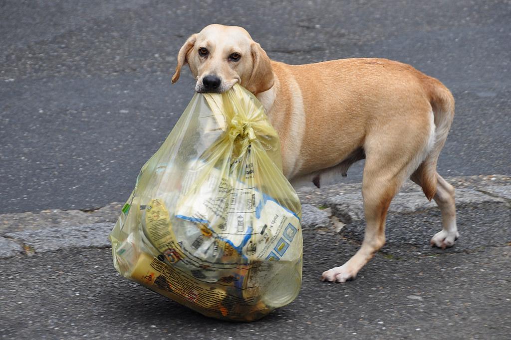 Dog Food Bag Sizes