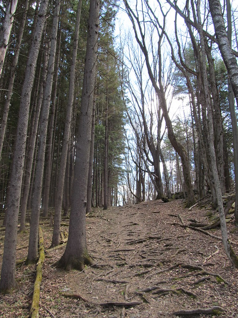 Trail up to Rensselaerville Falls