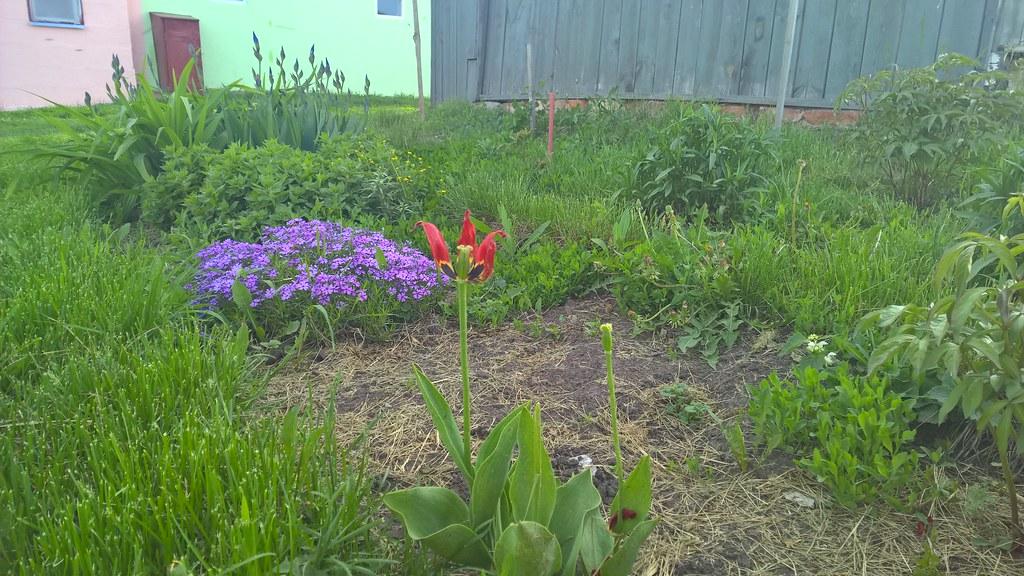 Цветы около дома