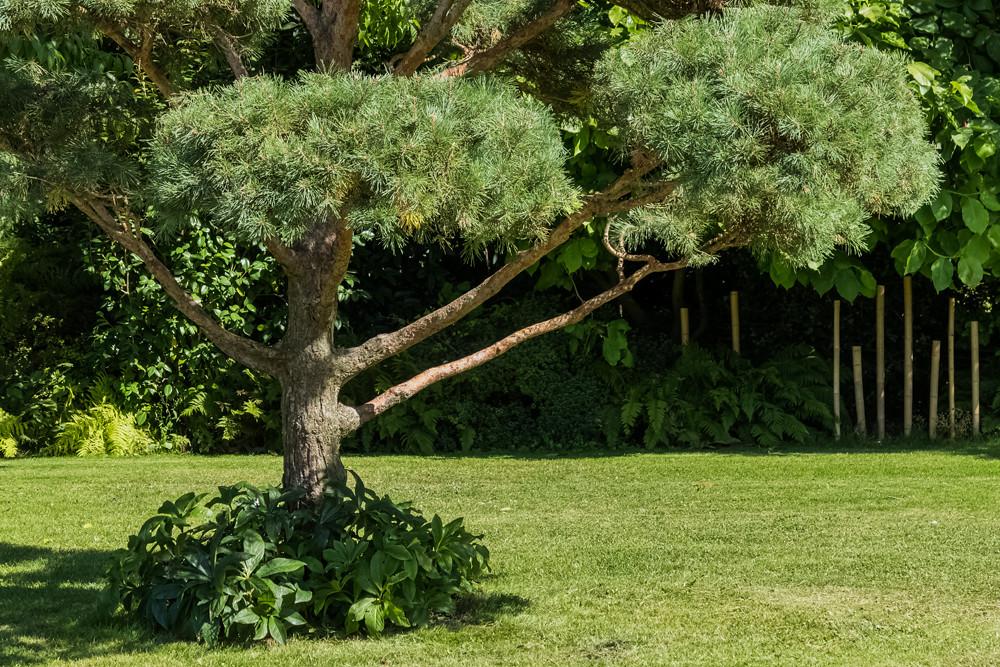Jardin des plantes jardin des plantes d 39 orl ans pierre esteffe flickr for Jardins de plantes