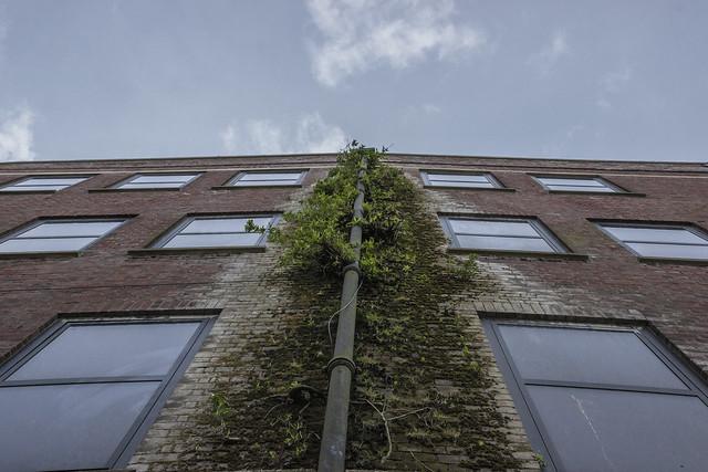 Norwich [Vertical Gardens] - 04