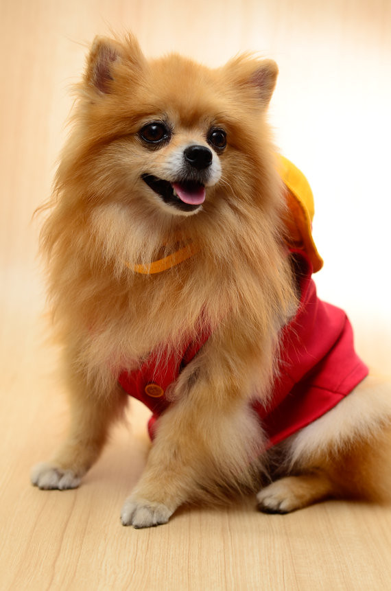 Luffy One Piece Dog Cosplay