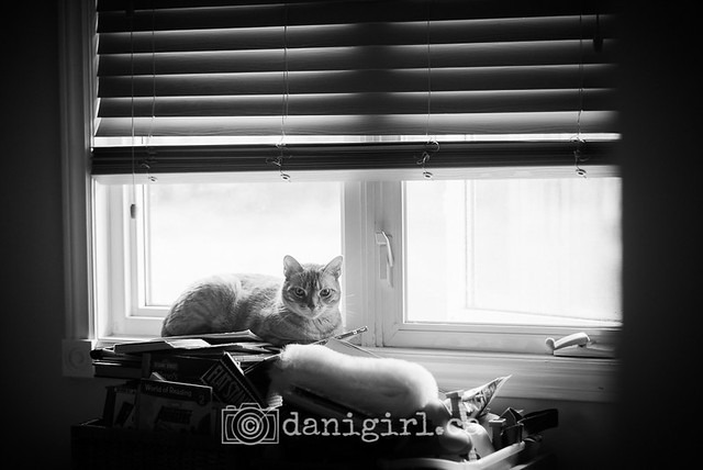willie in the window