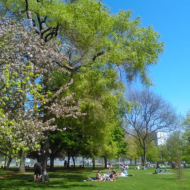 Trinity Bellwoods, 10 #toronto #queenstreetwest #trinitybellwoods #cherryblossoms #weepingwillows