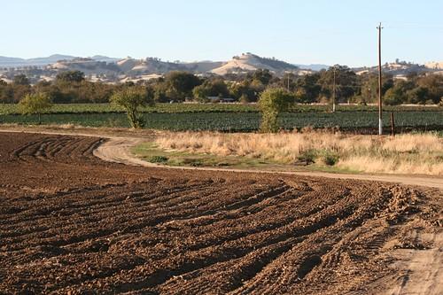 你的农场新闻照片-让他们种植!