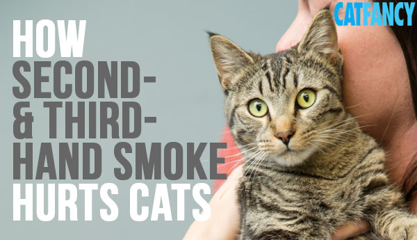 second-third-hand-smoke-hurts-cats