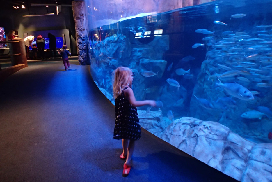 022415_aquarium14
