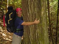 tr Meeks_big tree
