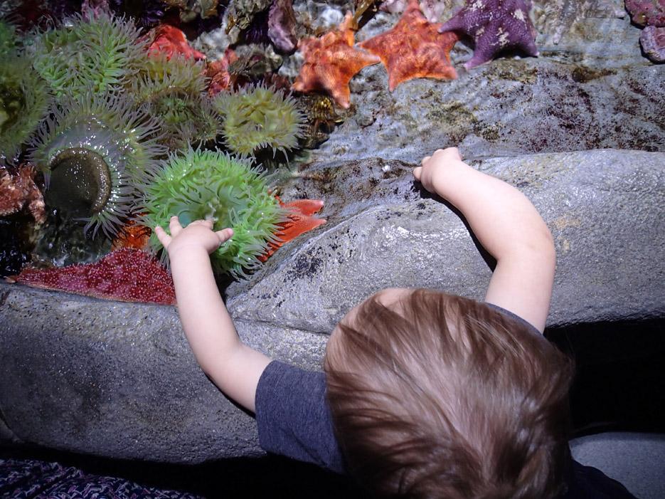 022415_aquarium06
