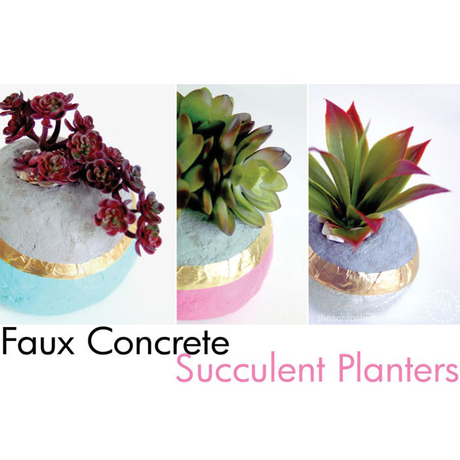 SucculentConcrete_650