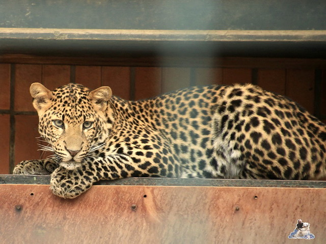 Tierpark Berlin 09.05.2015  169