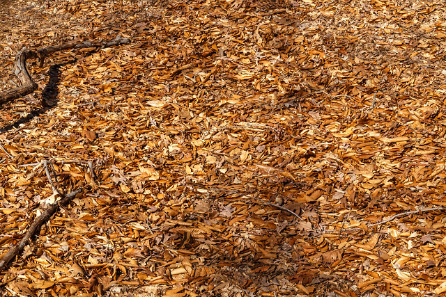 "Leaf ""Litter"""