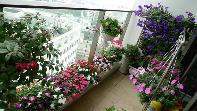 Những vị trí đặt cây cảnh mang thiên nhiên vào nhà bạn-Phần cuối