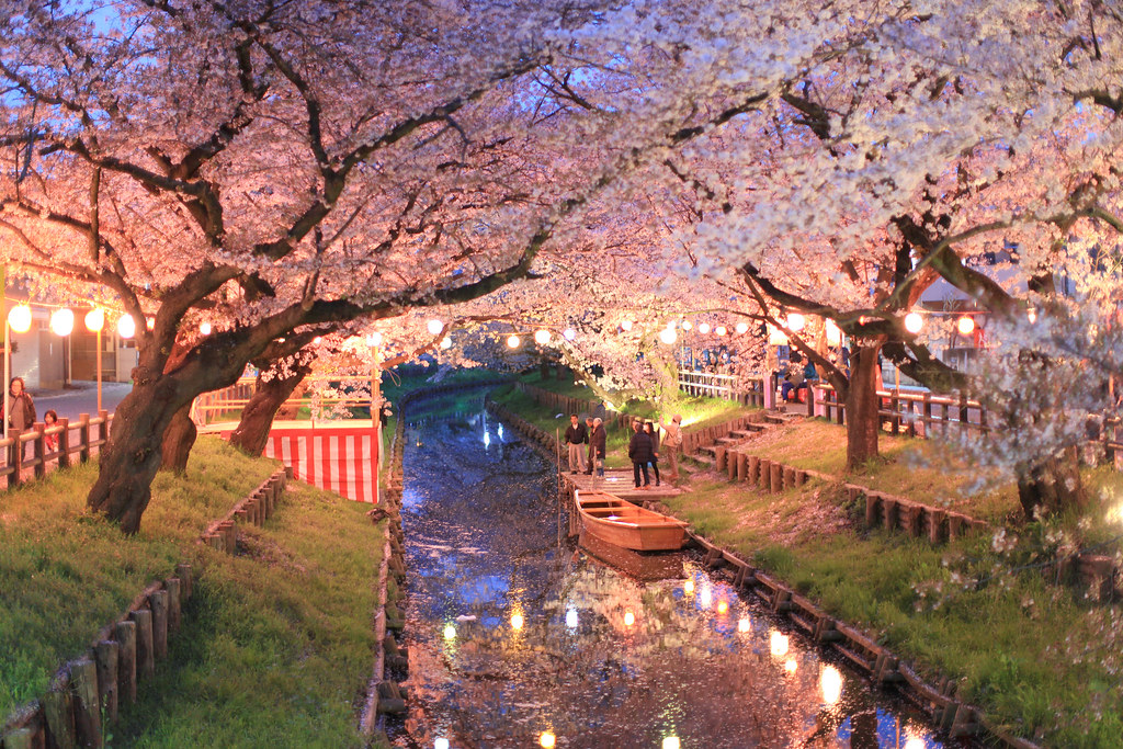 Kawagoe sakura canon 5dmarkii ef50mm f 1 2l usm for Tokyo what to see